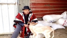 Actor Dharmendra shares video of him playing with a calf and also wishes his fans a Happy Vaisakhi.