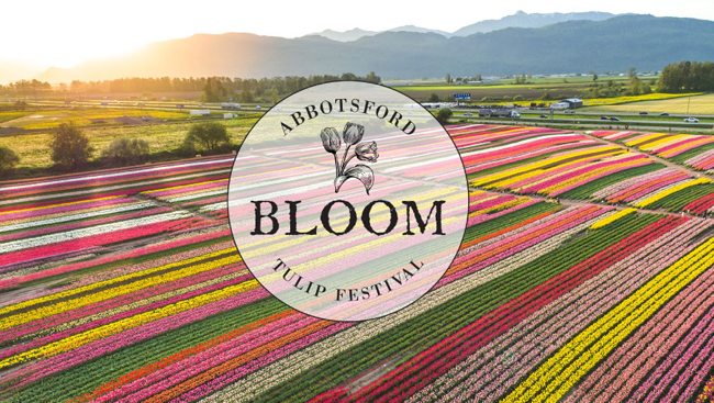 Bloom, The Abbotsford Tulip Festival Opens April 13th