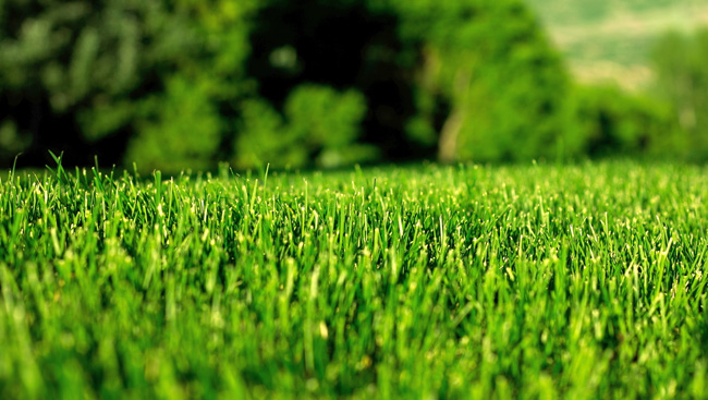 The Right Tools for a Greener Lawn
