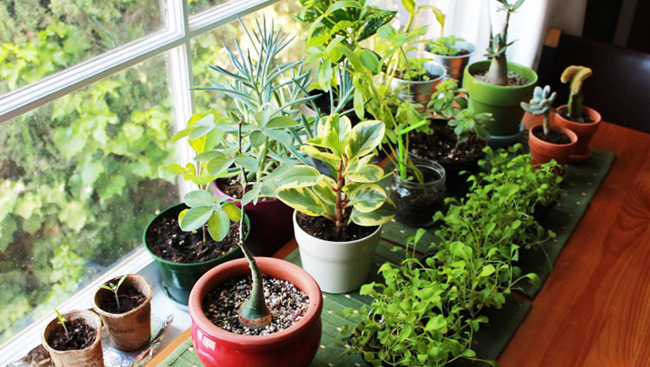 Add some green to your small space