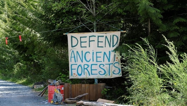 B.C. forest company seeks extension of injunction