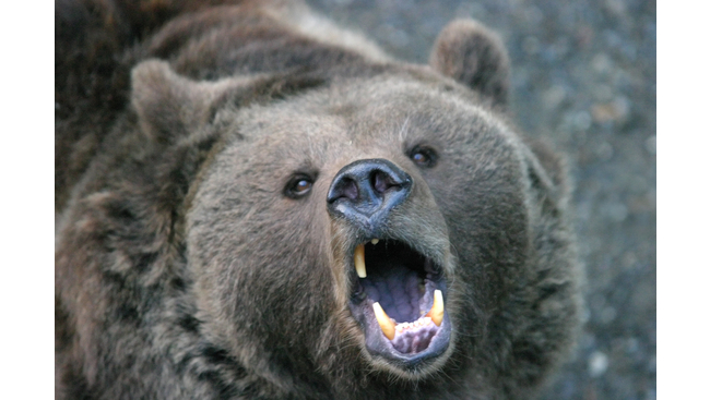 Man injured in bear attack near Lillooet, B.C.