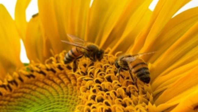 The amazing benefits of including bee pollen in your diet