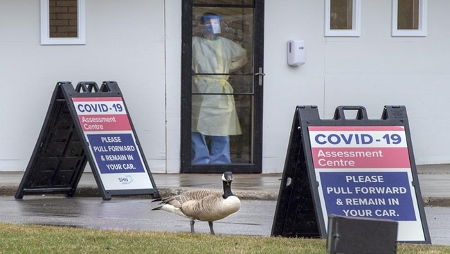 Friend or fowl: Making peace with Canada geese