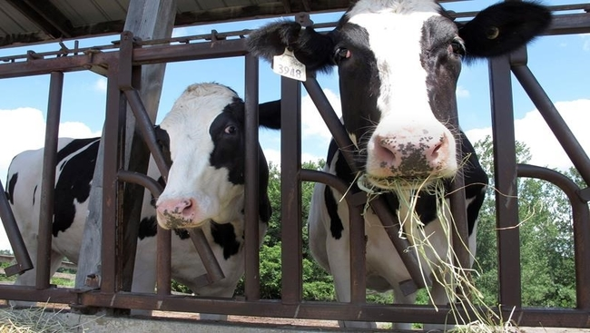 Dairy farmers demand compensation amid pandemic