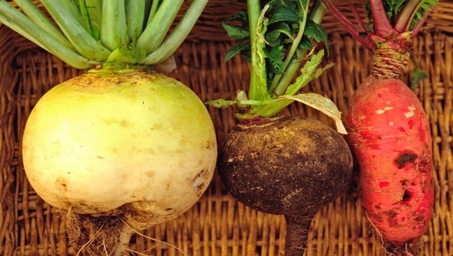 Gardening: Winter radishes can add off-season colour, flavour