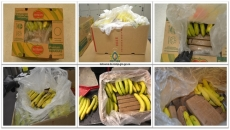 Concealing Cocaine in international shipments can be bananas: Kelowna RCMP