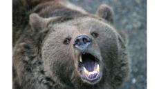 Man injured in bear attack near Lillooet, B.C.