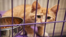 New cat virus found at B.C. SPCA prompts science journal publication