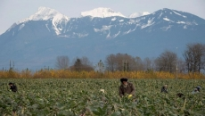 New site is one-stop shop for B.C. workers, farmers, during pandemic