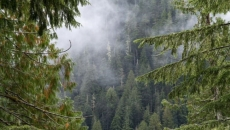 Bill introduced to overhaul B.C. forestry