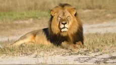 Pakistani Man Unleashes 'Pet' Lion On Electrician To Avoid Paying Him