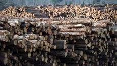 Fire destroys logs, mill saved in Chetwynd, B.C.