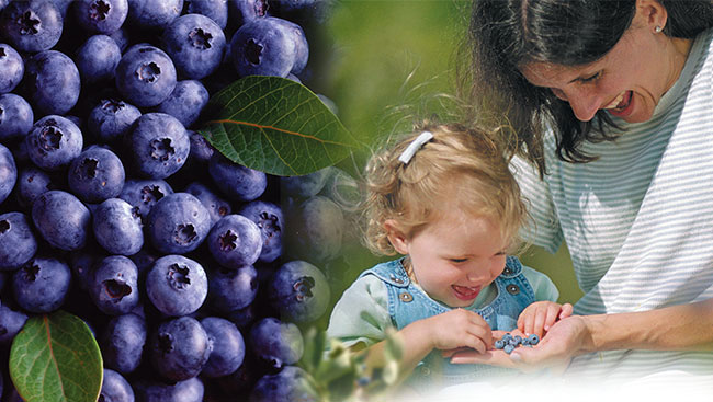 Stay Healthy With Fresh BC Blueberries