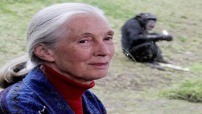 Renowned conservationist Jane Goodall wins Templeton Prize
