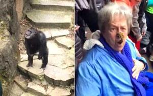It Got Grandma!: Chimp at Zoo Throws Poo in Grandma's Face!