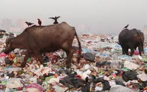 The Innovative Way India's Handling Its Massive Trash Problem